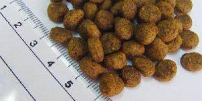 画像1: フィッシュ4ドッグ/サーモン 小粒3kg